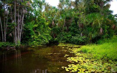 Reserva Extrativista Chocoaré-Mato Grosso, no Pará, recebe investimentos para preservação pelo Programa Adote um Parque