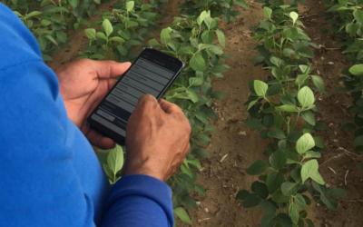 Monitoramento eficaz de pragas reduz aplicações e custos pela metade na cultura da soja