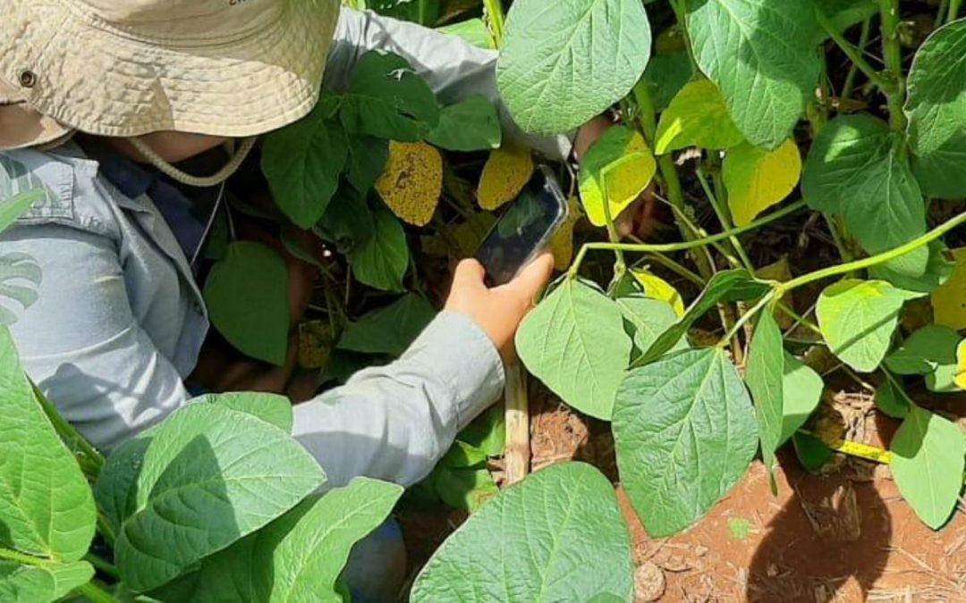 Manejo digital de pragas da soja pode gerar economia de R$ 81/ha
