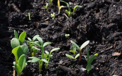 Produtos biológicos já são utilizados em 25% das áreas cultivadas no Brasil