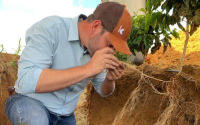 Manejo biológico favorece a produção de café especiais e certificados