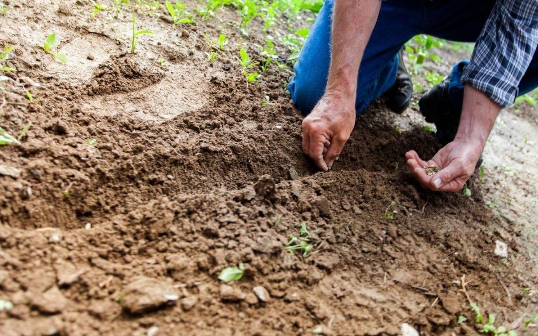 Software de gestão de fazendas também indica plantabilidade ideal  para desenvolvimento dos cultivos