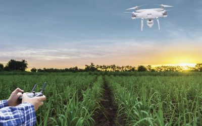 Koppert faz parte da Bonsucro, plataforma global de sustentabilidade da cadeia da cana-de-açúcar