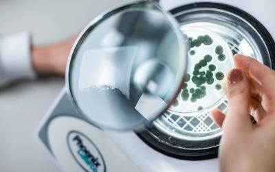 Sistema integrado de manejo biológico oferece pacote tecnológico mais eficiente e rentável aos produtores